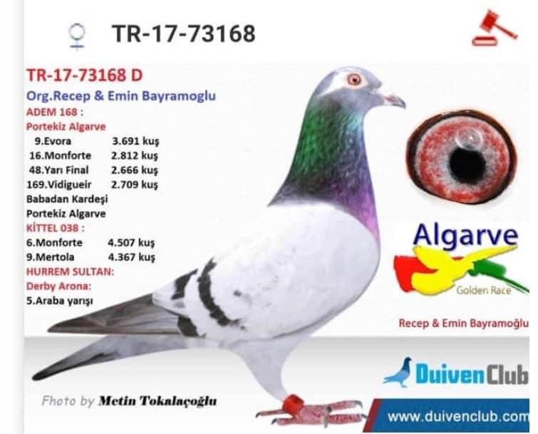 TR20-020547 DİŞİ / ADEM  168 KIZ TORUNU
