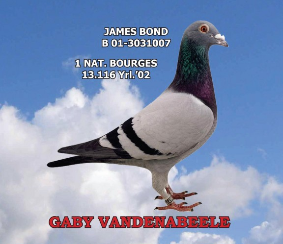 TR20-025662 DİŞİ / GABY VANDENABEELE % 100