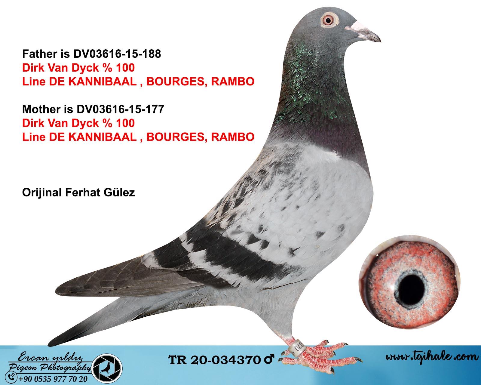 TR20-034370 ERKEK / DIRK VAN DYCK % 100