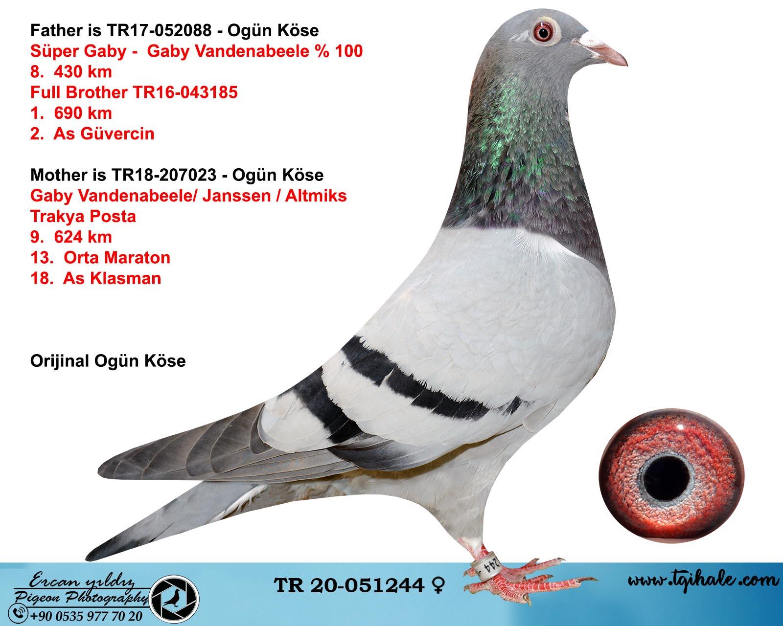 TR20-051244 DİŞİ / BABASI GABY VANDENABEELE % 100 -  8. 430 KM ANNE GABY JANSSEN