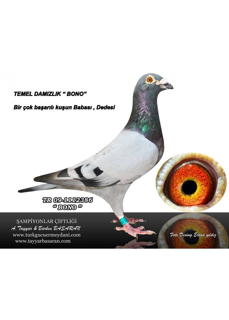 TR-15-129083 ERKEK 5-/As Black Sea O.L.R TAM KARDEŞİ